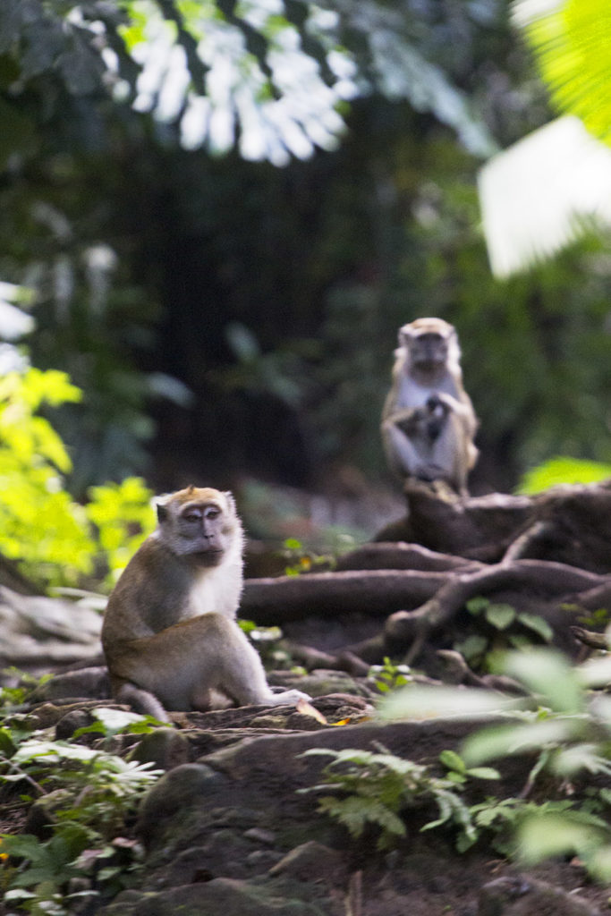 Monkeys of Bongao Peak