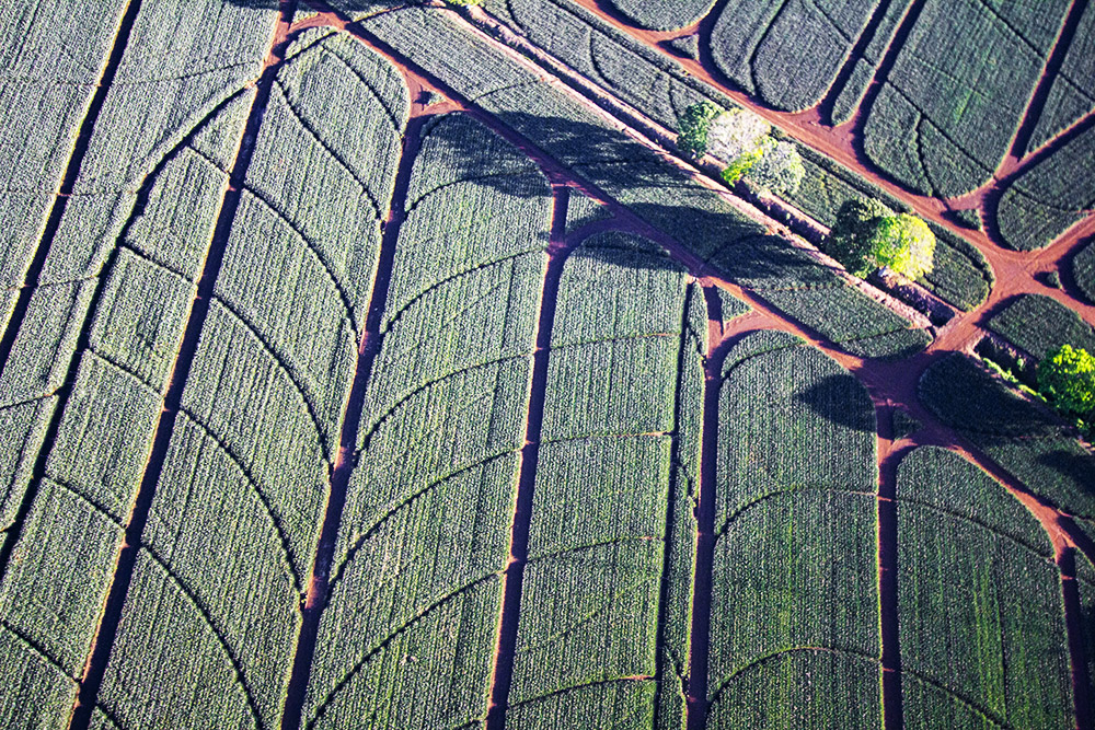 Pineapple farm as seen from an ultralite plane