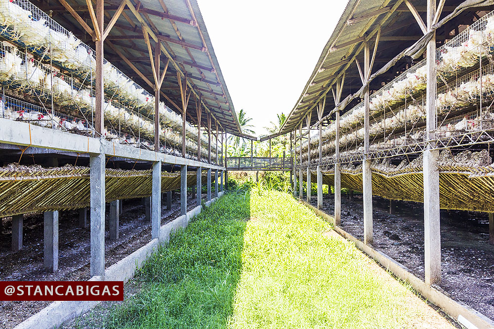 poultry industry in batangas